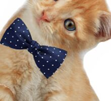 Bow Tie Cat Sticker