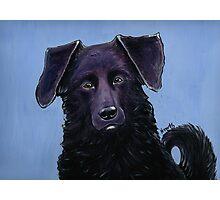 Handsome Dog Photographic Print