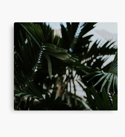 Palm trees in Miami Canvas Print