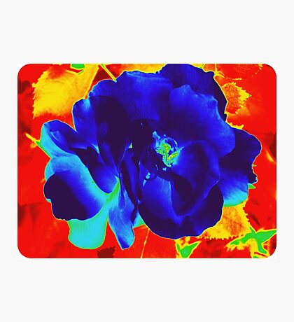 Cool Rose in Fire Photographic Print