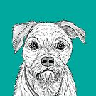Border Terrier Portrait by Adam Regester