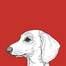 Smooth Haired Dachshund by Adam Regester