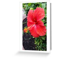Crimson Bloom with Water Drop Detail Greeting Card