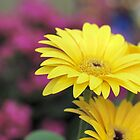 Yellow and Purple Flowers by Keala
