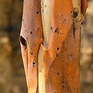 Bark by Werner Padarin