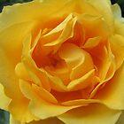 Rosy Ruffles by Monnie Ryan