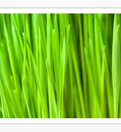 Fresh Wheatgrass background Sticker