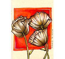 Inktober Poppies Photographic Print
