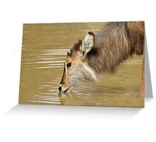 Waterbuck Gold - Pleasure of Life Greeting Card