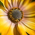 sunny yellow by karenanderson