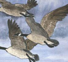 Canadian Geese Take Flight Sticker