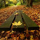Autumnal Rest. by Livvy Young