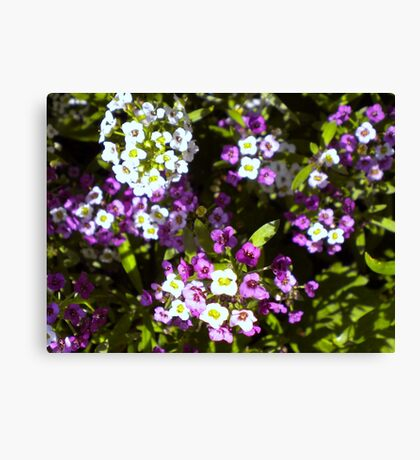 The beauty of wild Canvas Print