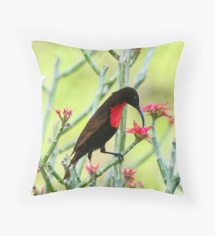 Close-up of Scarlet-chested Sunbird (Nectarinia senegalensis) Throw Pillow