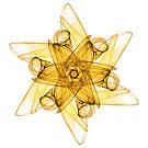 Saffron Star by Ross Hilbert