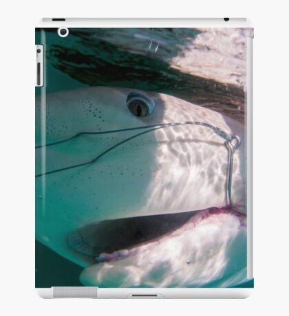 Researchers are tagging a sandbar shark (Carcharhinus plumbeus)  iPad Case/Skin
