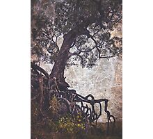 Scary old tree with exposed tangled roots Photographic Print