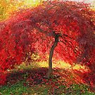 Little Red Tree by Lisa Cook