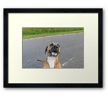 Hank, playful Framed Print