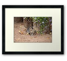 tiny kitten with flowers Framed Print