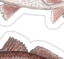 Redfish Watercolor  Sticker