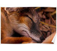 Animals - Night Night Mr Fox Poster