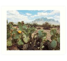 Superstitious Arizona Desert Mountain Cactus Bloom Art Print