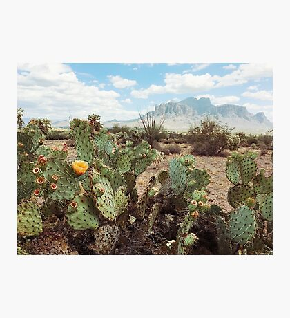 Superstitious Arizona Desert Mountain Cactus Bloom Photographic Print