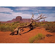 Gnarled Beauty of the Valley Photographic Print