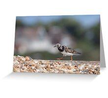 Ruddy Turnstone (Arenaria interpres) walking along a pebbled beach groin at the seaside. Greeting Card