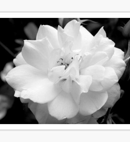 Rose in B&W  - Calendar Image Sticker