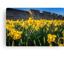 York Walls Daffodils  Canvas Print