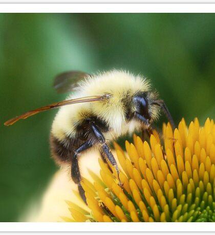 Bee Glow Sticker