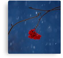 Blue house rowan tree Canvas Print