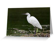 Little Egret (Egretta garzetta) standing on an old nest platform. Greeting Card