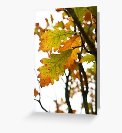 Fall Time Greeting Card