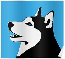 Husky - siberian husky Poster