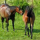 """""""Horses with Attitude no. 4, 'Don't Touch the Coat!'""""... prints and products by © Bob Hall"""