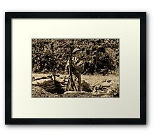 WW2 Soldier Framed Print
