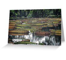 Waterlily Pond v.2 Greeting Card