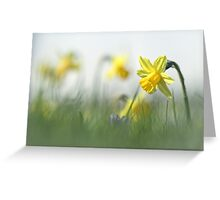 Daffodils in the field Greeting Card