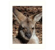 Red-necked Wallaby Portrait Art Print