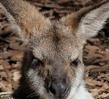 Red-necked Wallaby Portrait by Margaret Saheed