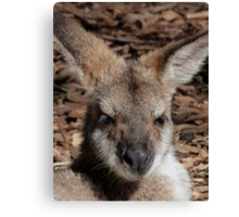 Red-necked Wallaby Portrait Canvas Print