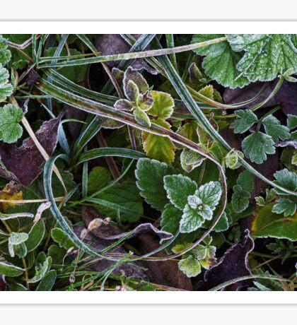 Autumn frost Sticker
