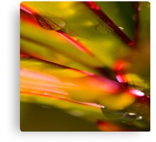 Plant Abstract Canvas Print