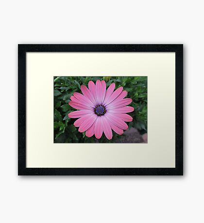 May I Admire You Again Today? Framed Print