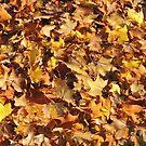 Autumn's Gold by CreativeEm