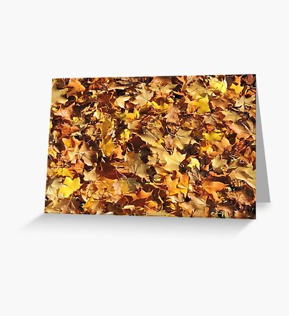Autumn's Gold Greeting Card