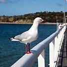 Gull of Granite Island by Paul Barnett